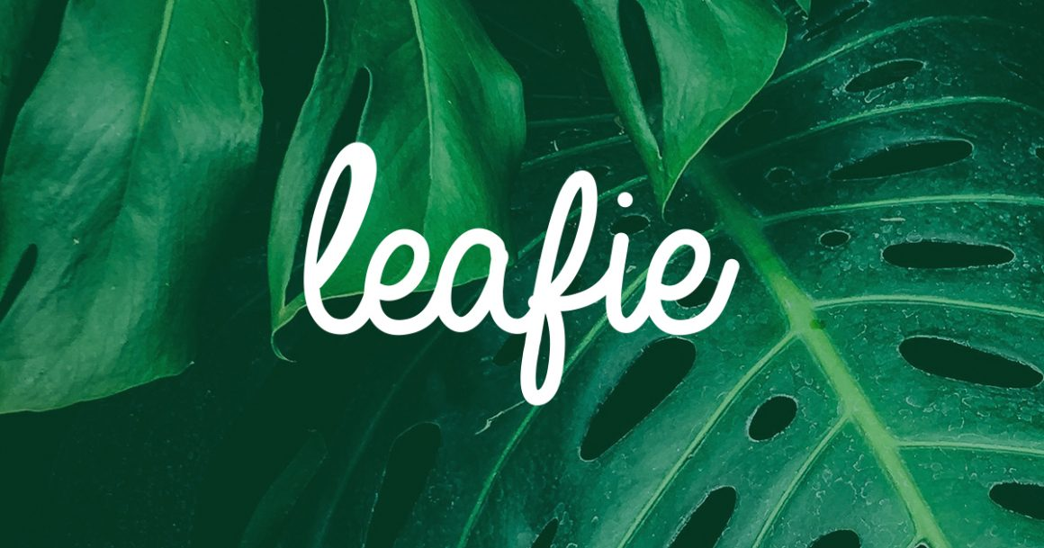 leafie - CBD news and articles for the UK