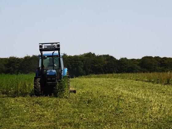 tractor in hemp field
