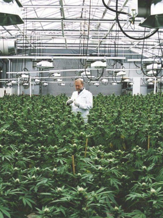 indoor legal cannabis farm
