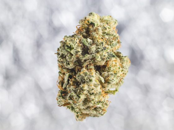medical cannabis bud closeup