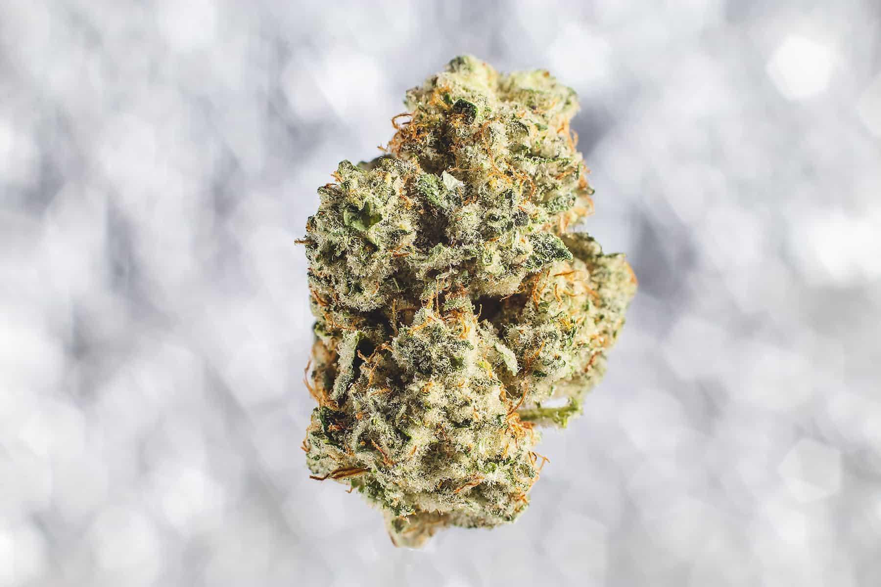 medical cannabis bud closeup