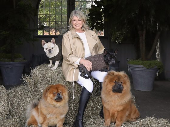 Martha Stewart CBD for pets