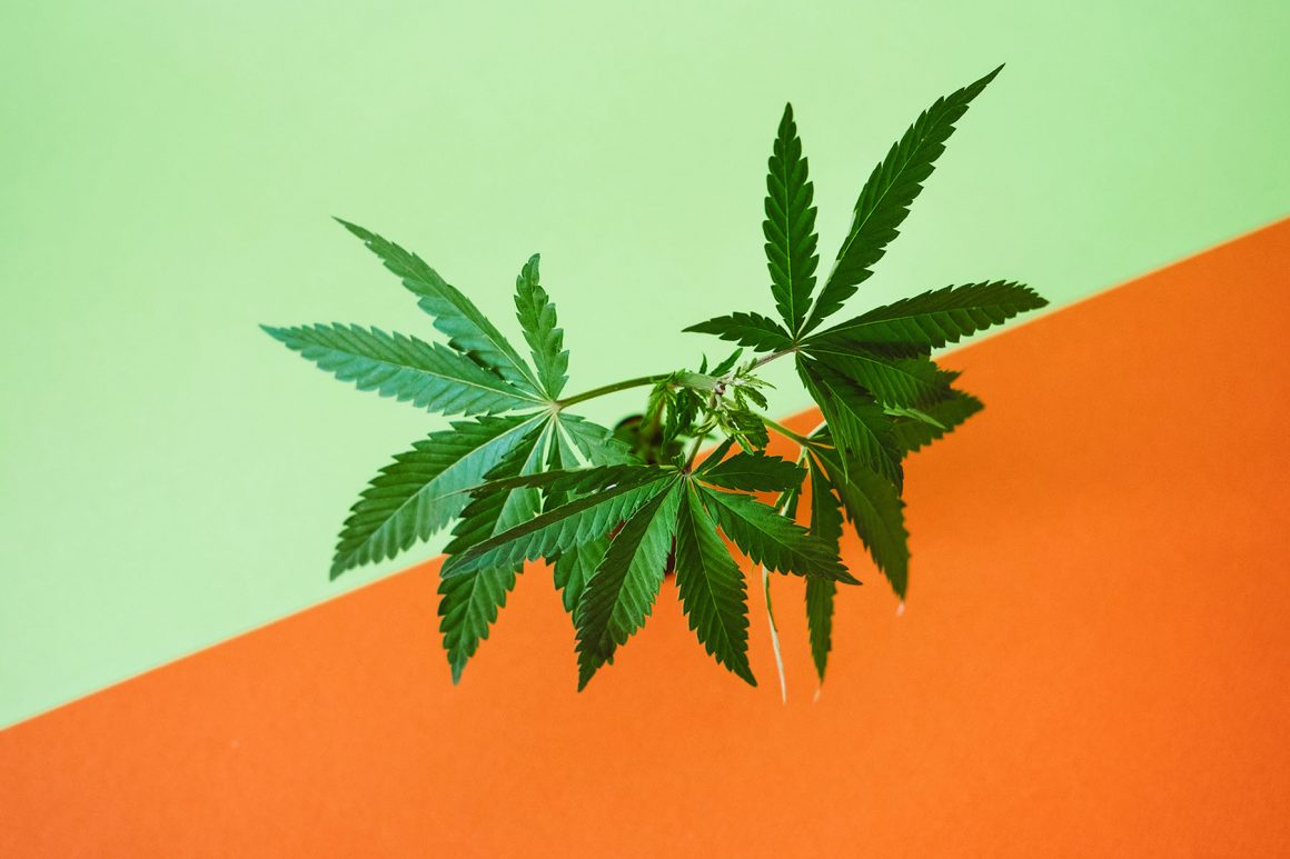 Marijuana leaves web banner