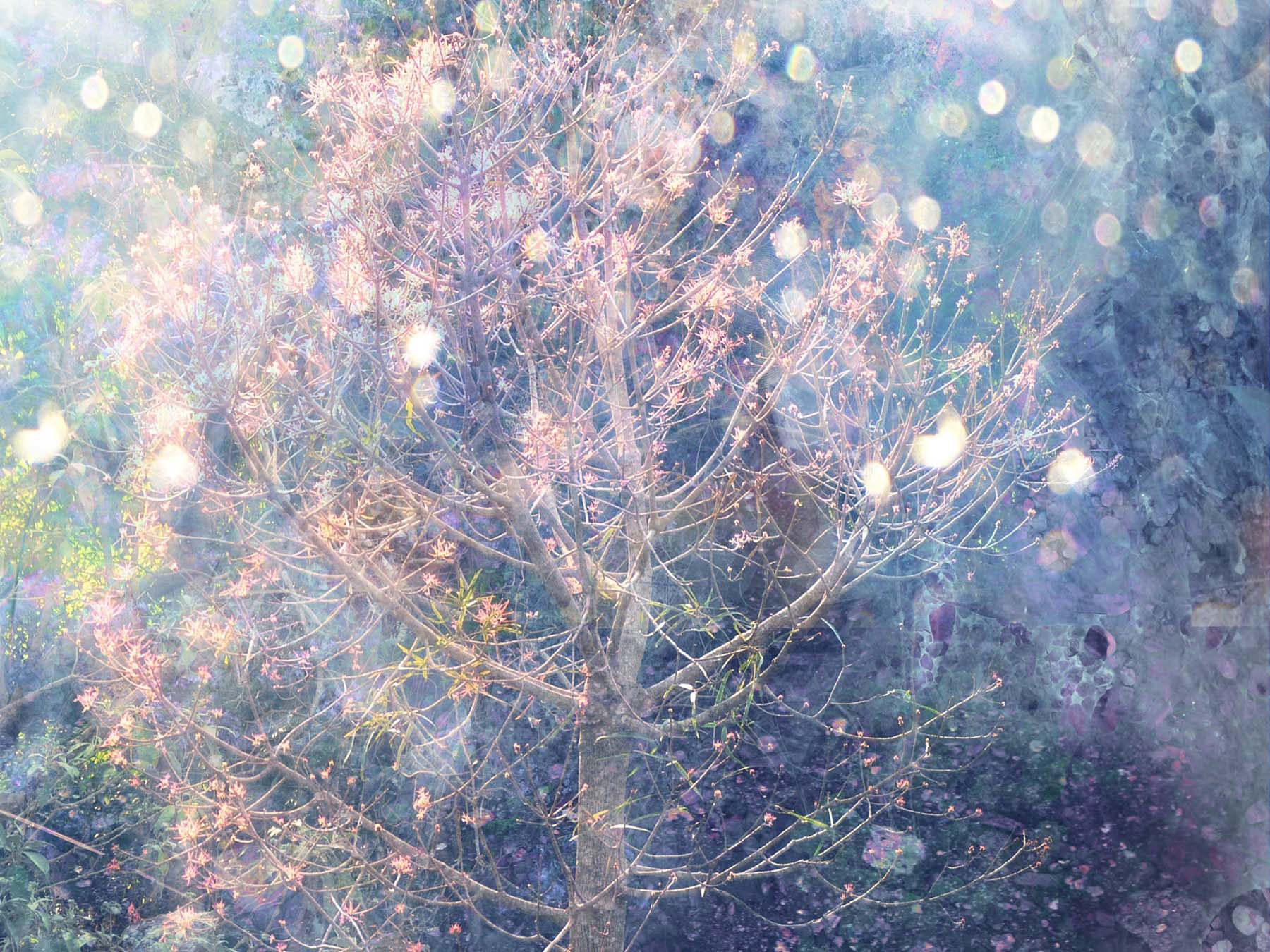 dreamy abstract image