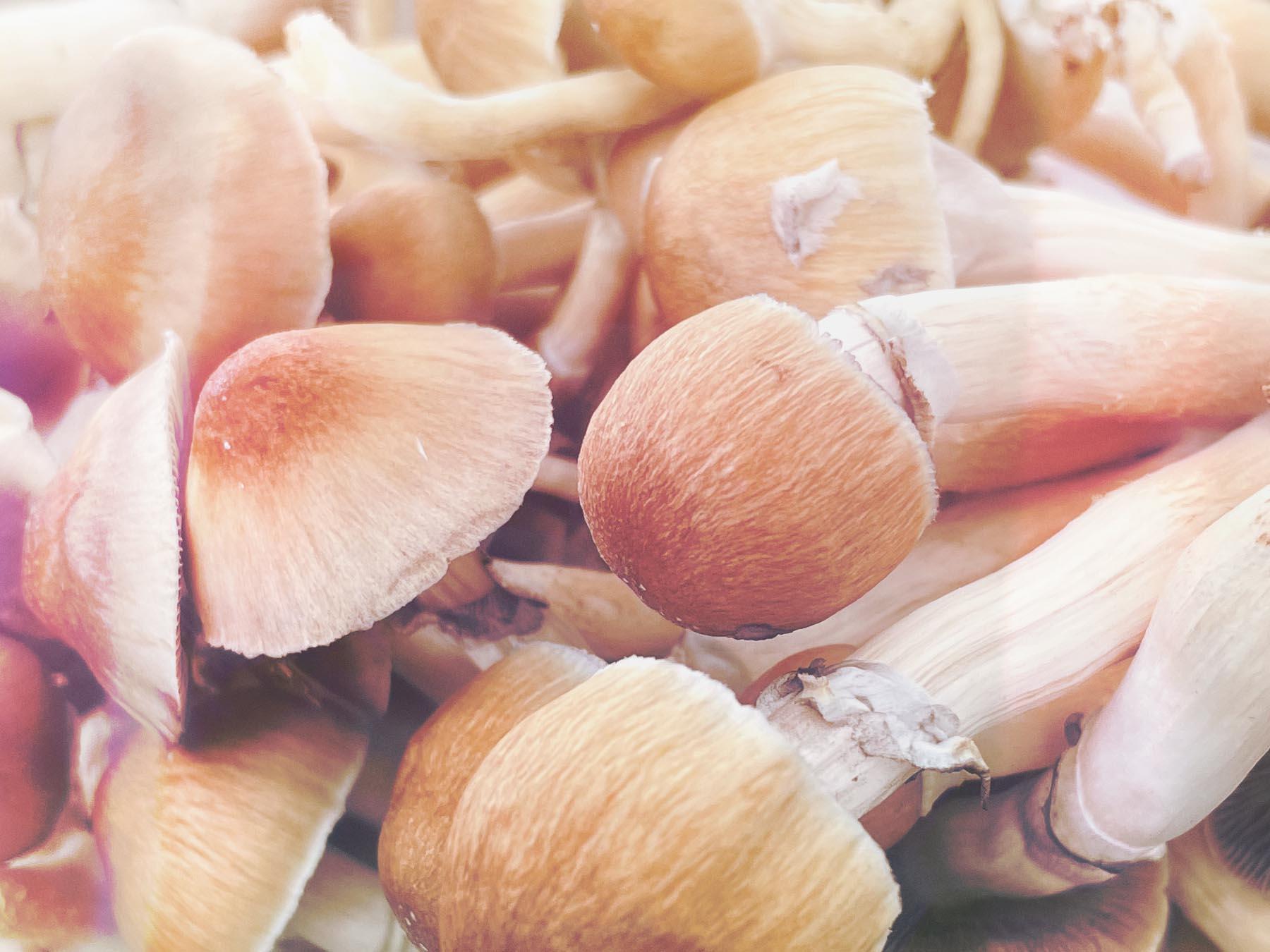 distorted photo of magic mushrooms close up
