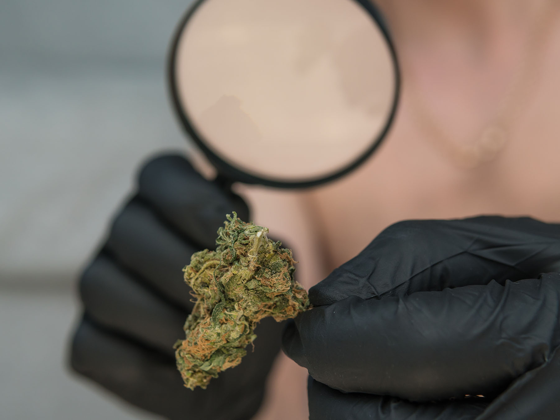 person inspecing medical cannabis bud