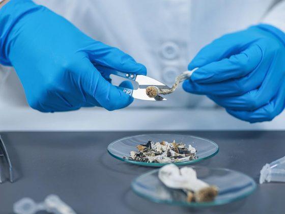 Laboratory Experiment, Preparing Micro Doses Psilocybin, a Derivative from of Magic Mushrooms