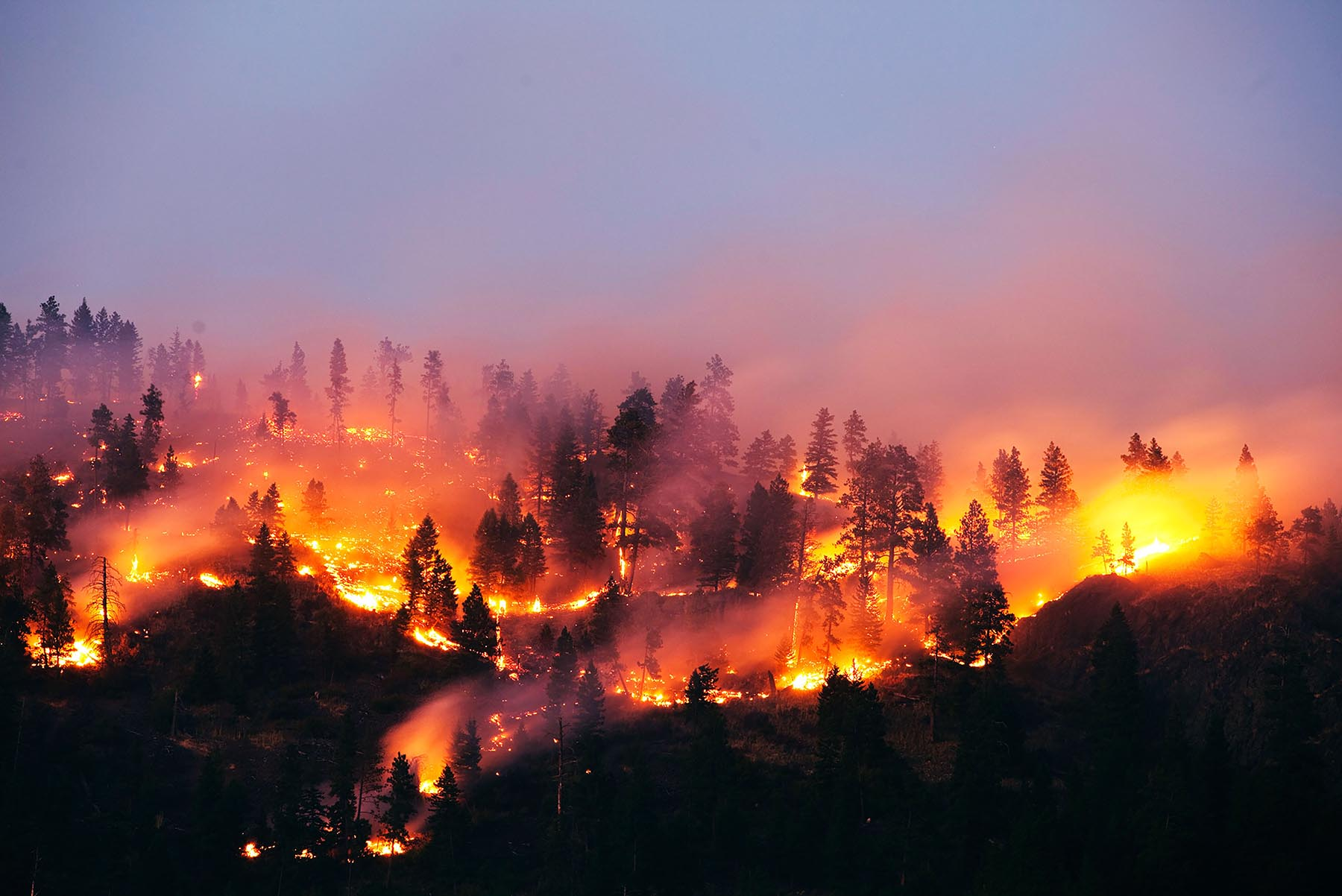 forest fire from above